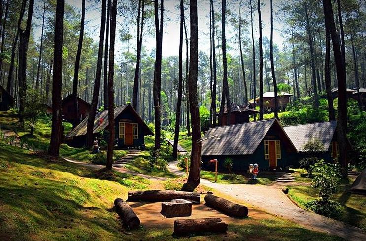 Hutan pinus cikole milik perhutani-Outbound Bandung-Outbound Lembang